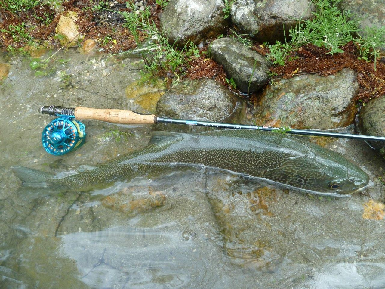 Fly Rod Alpen Nymph 4 in 1 - pictures from testing