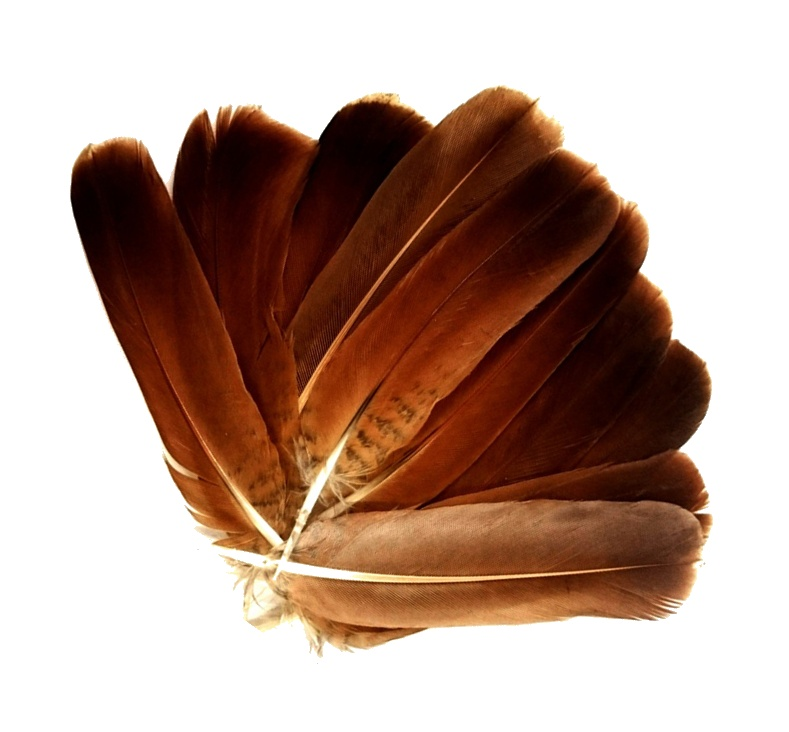 Fly Tying Feathers English Partridge Plain Cinnamon Brown Tails Fly Tying