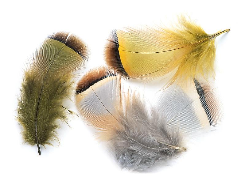 Veniard French Partridge Feathers