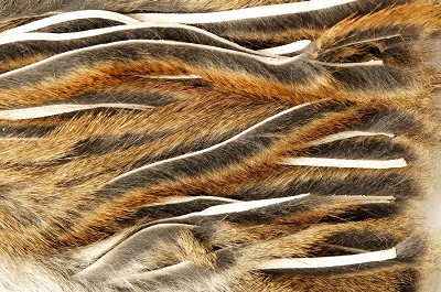Micro Zonker Pine Squirrel Veniard Whole Skin