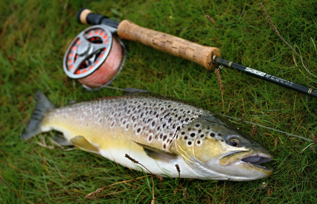 Fly Fishing For Danish Sea Trout By Streamerguys