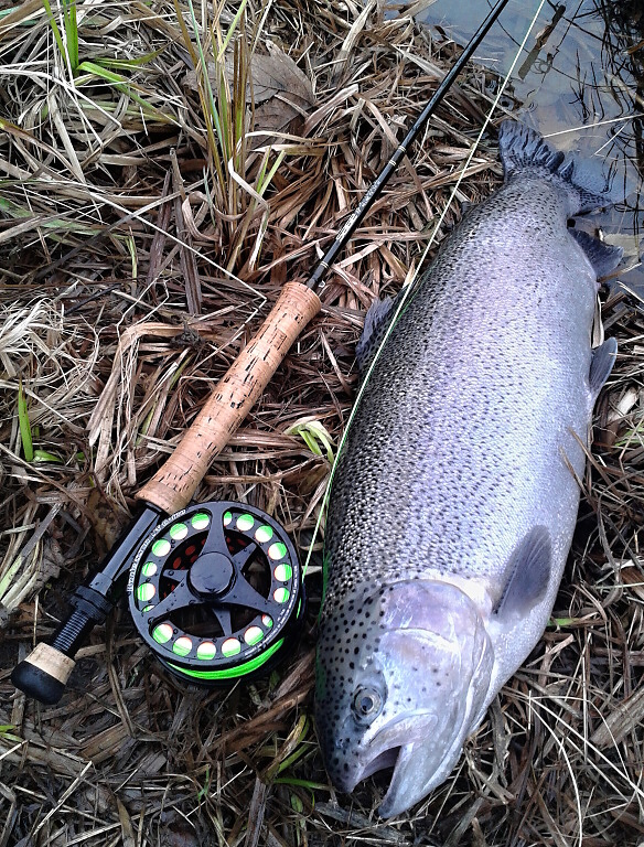 A nice winter rainbow caught on a slowly retrieved AR Peacock Head Viva Special. In the colder season, the fish are very moody, but if you hit the