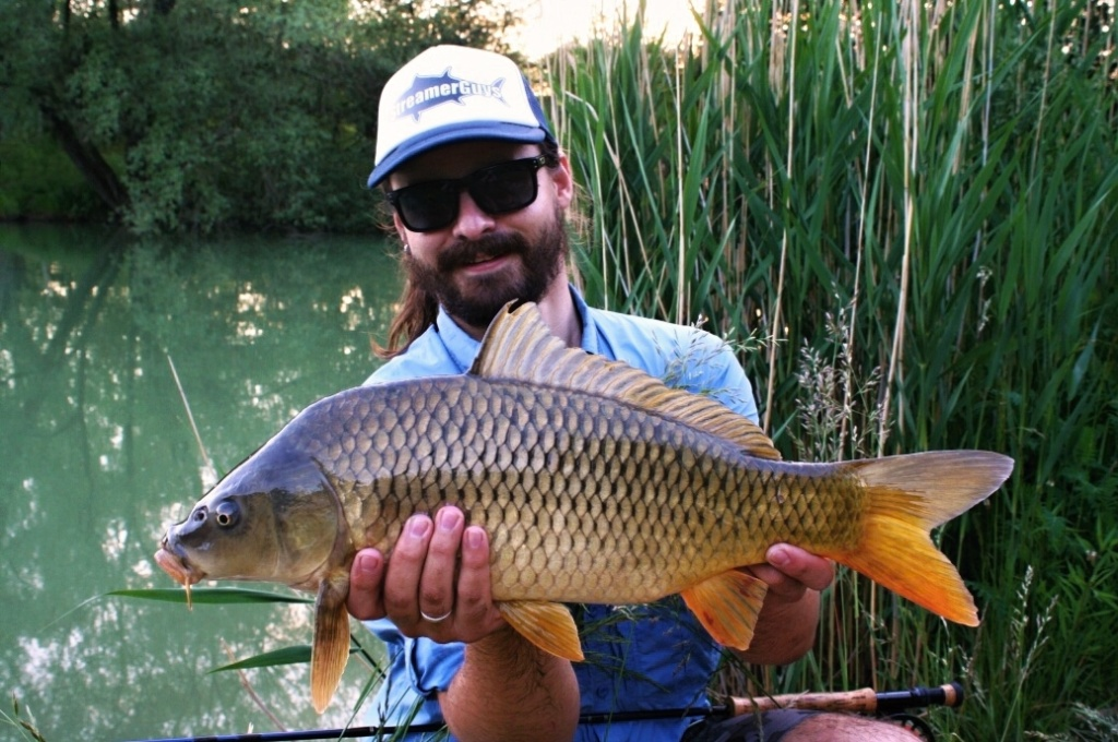 Honey colored carp from summer evening.
