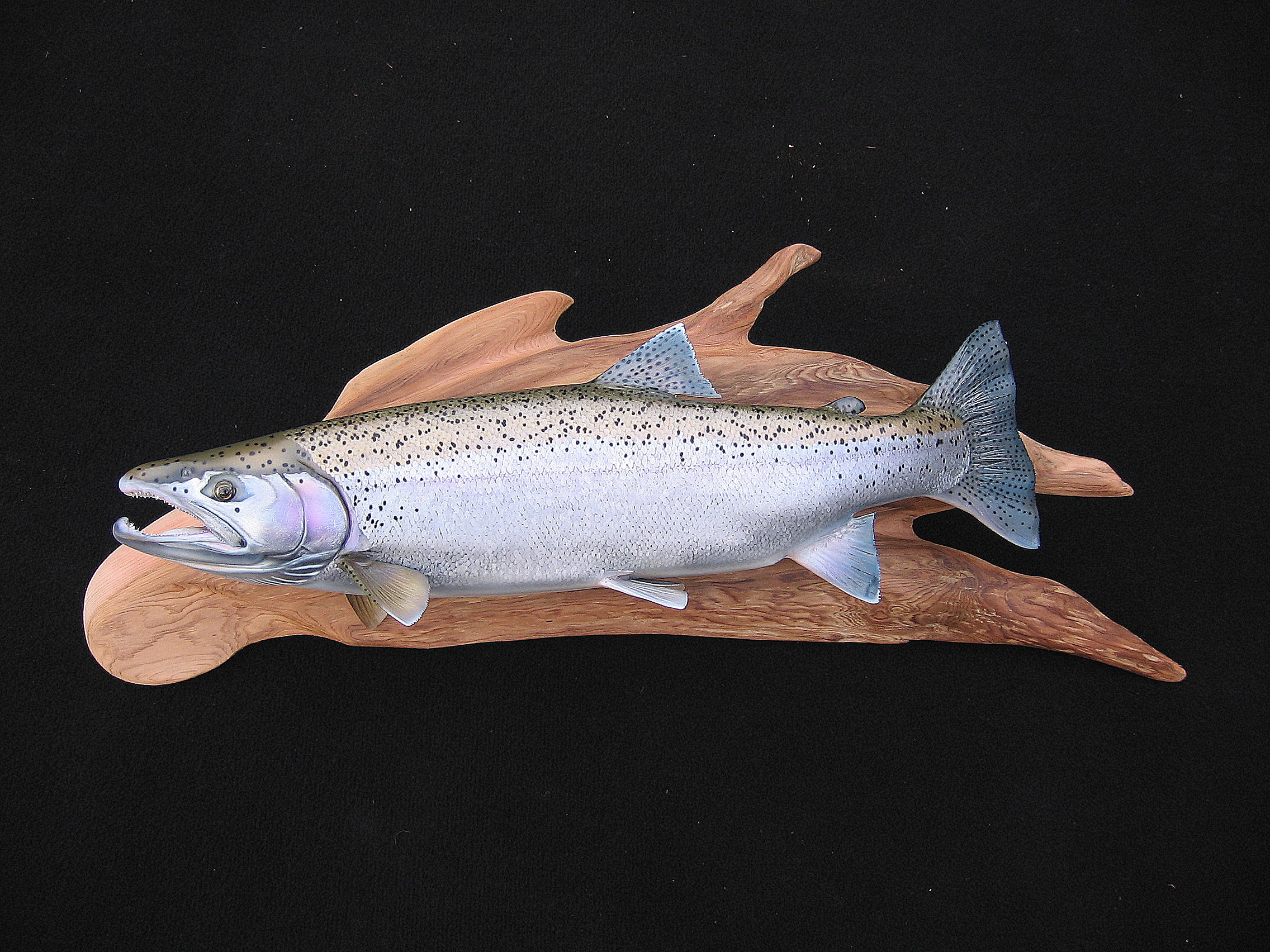 10lb. Steelhead Fish Replica on cedar enhancement