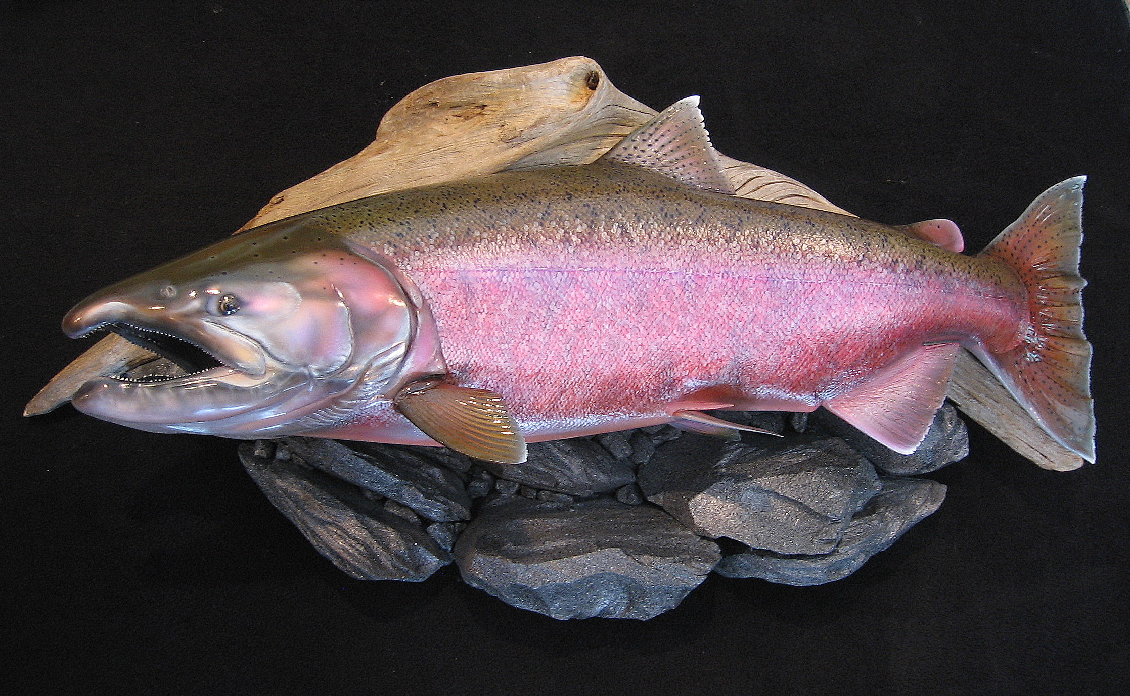 Alaskan Spawning King Salmon Replica featured on riverrock