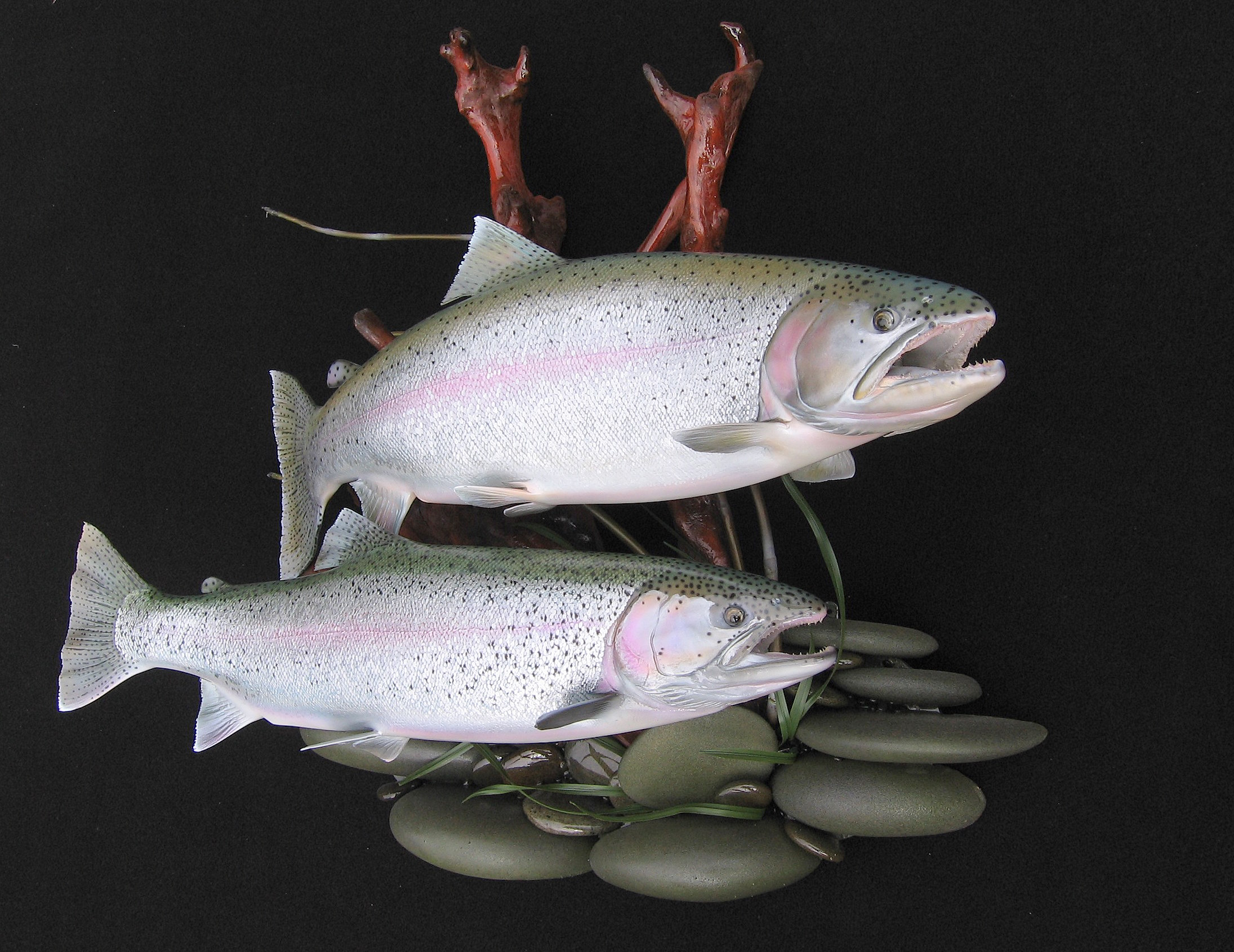 Double Alaskan Rainbow Replicas on Streambed Habitat Wall Mount