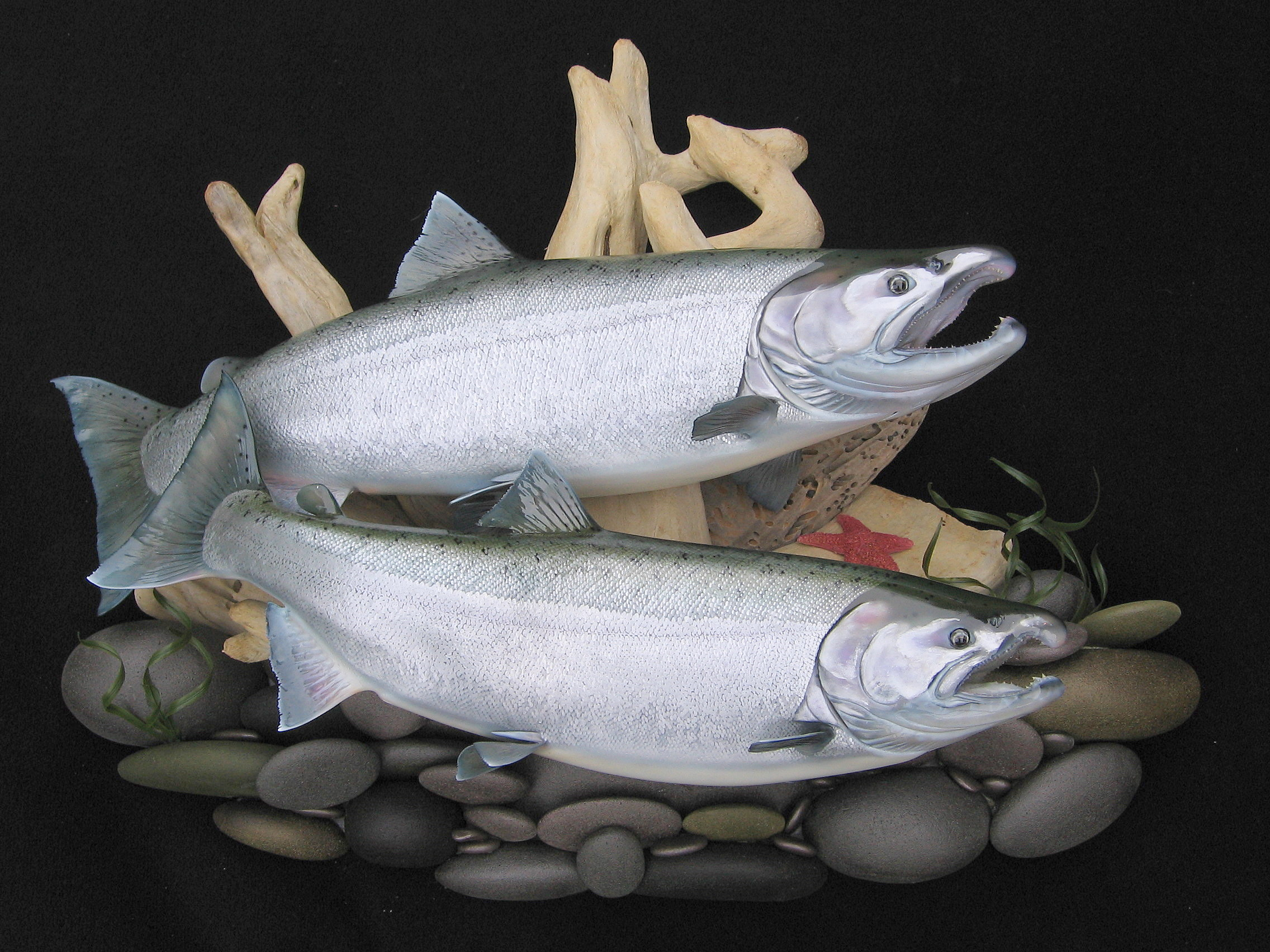 Double Coho Salmon on Pacific Beach  Wall Display