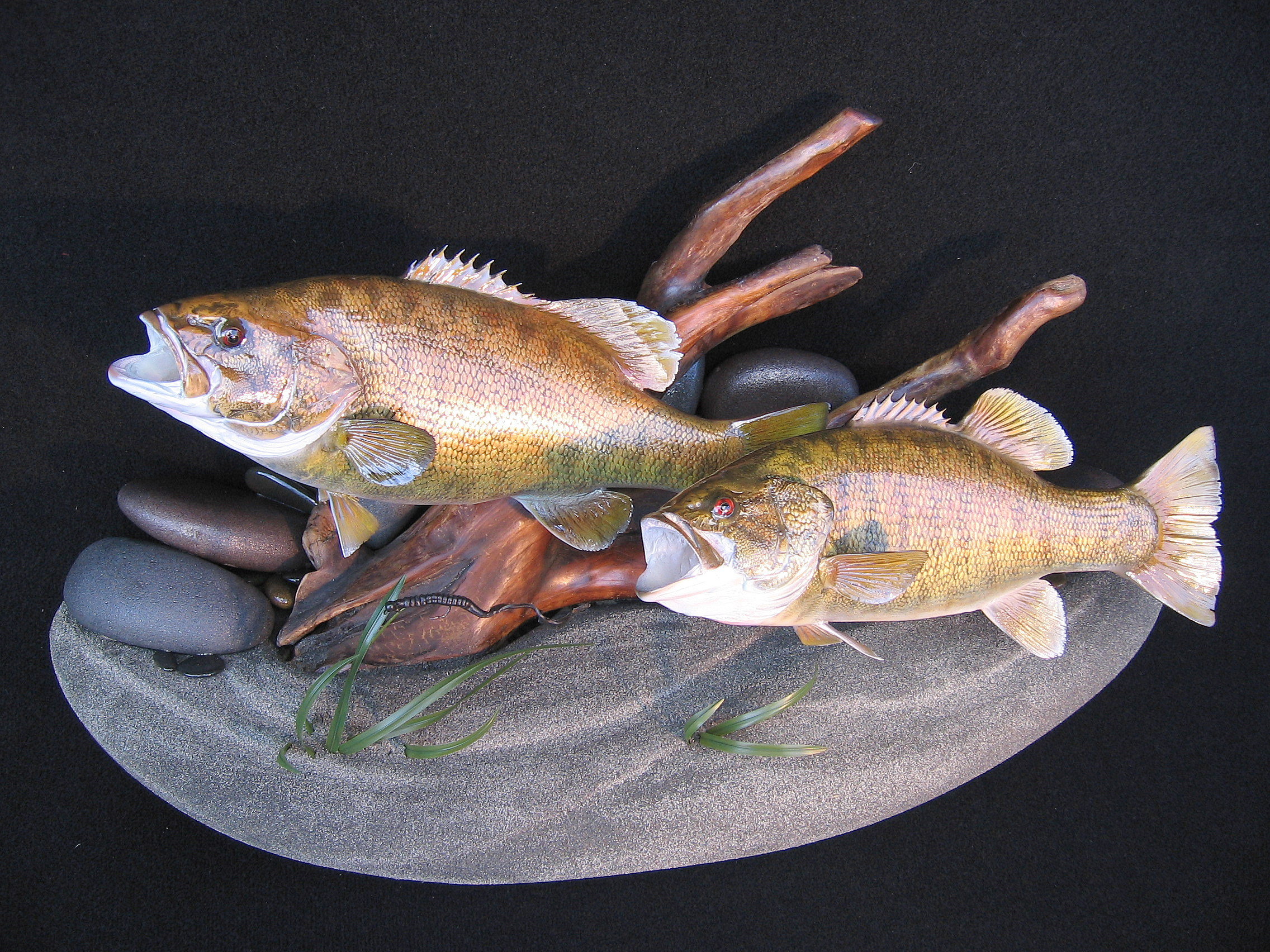 Double Largemouth Bass Replicas on Lakebottom Wall Display