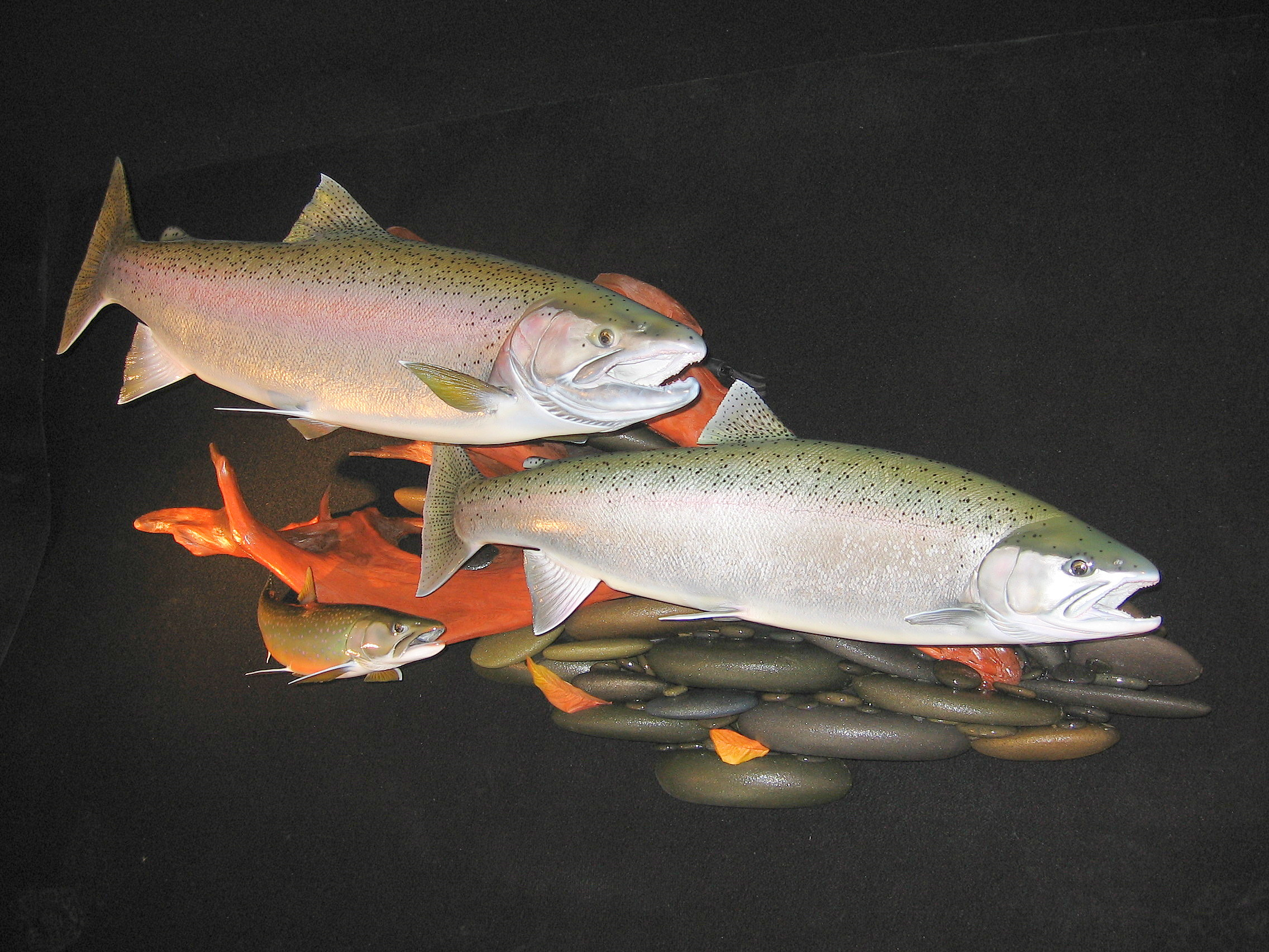 Double Steelhead featured with Dolly Vardon Trout Replica on Riverrock wall display