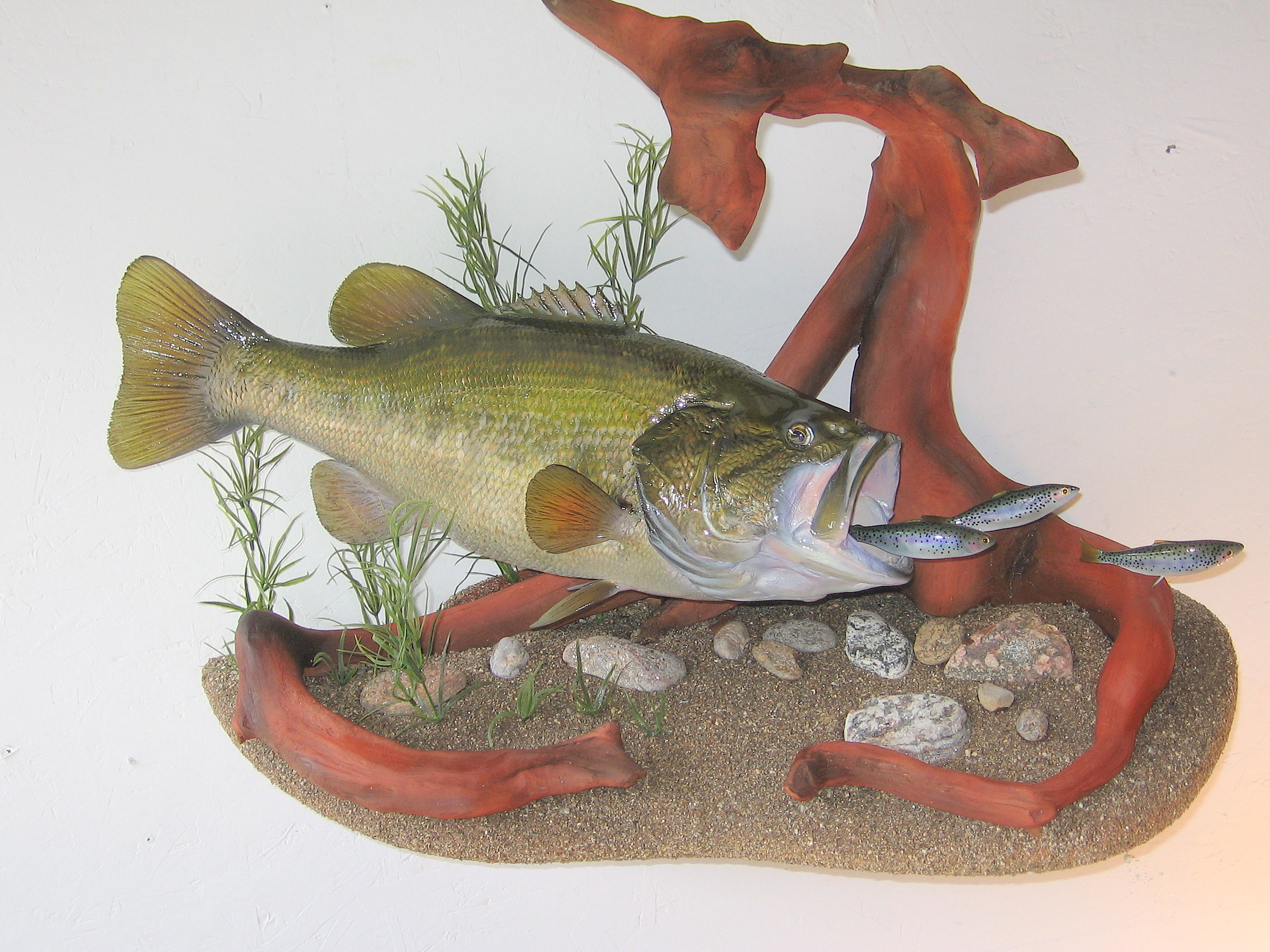 Largemouth Bass fish replica chasing Minnows