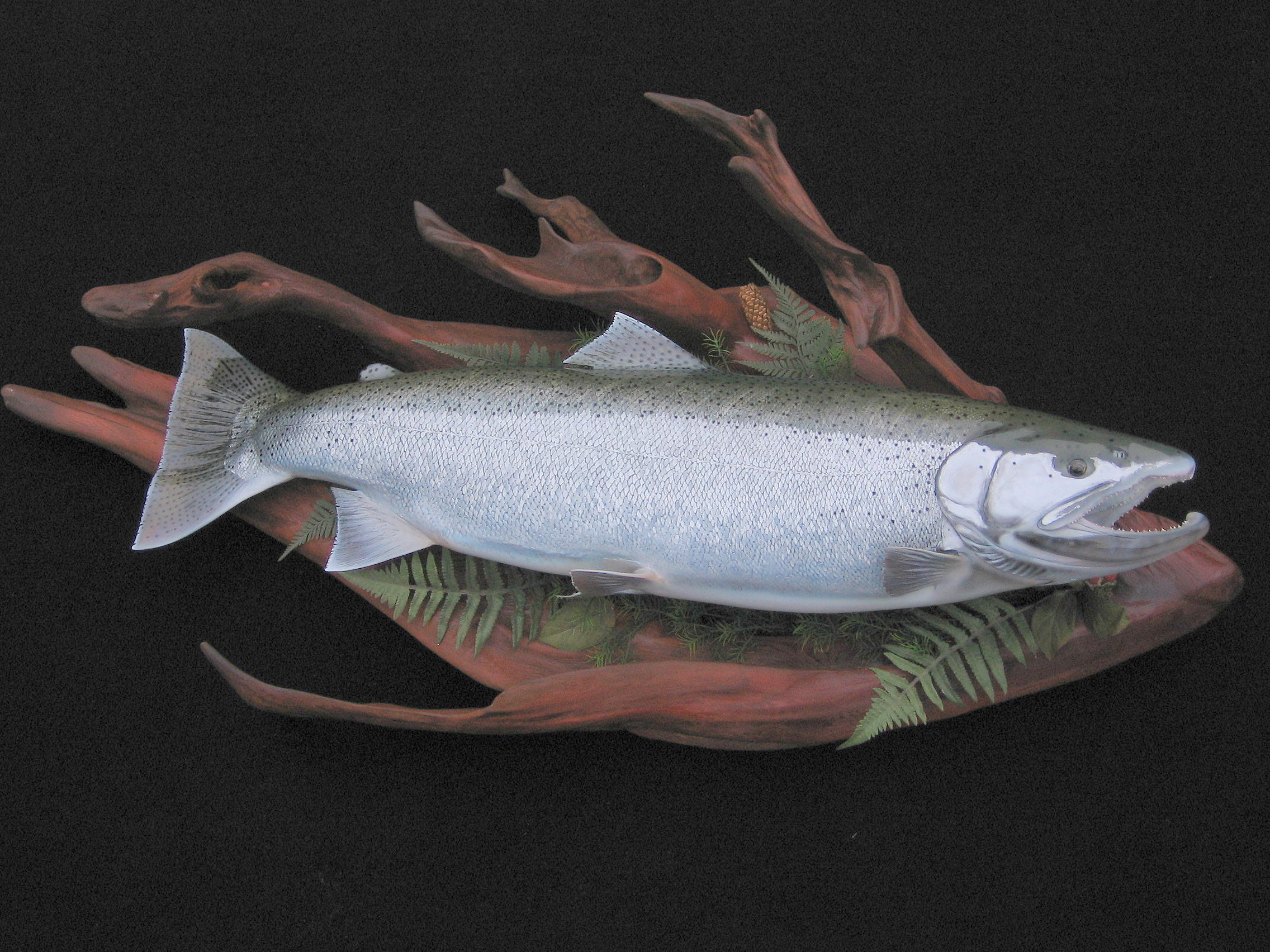 Olympic Peninsula Rainforest Steelhead Replica on Cedar Driftwood Display